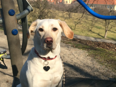 Doglovers-klient-Bamba