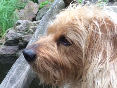 Doglovers-klient-Ben