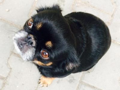 Doglovers-klient-Nessie